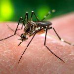 Zika - Quello che è successo nel 2016